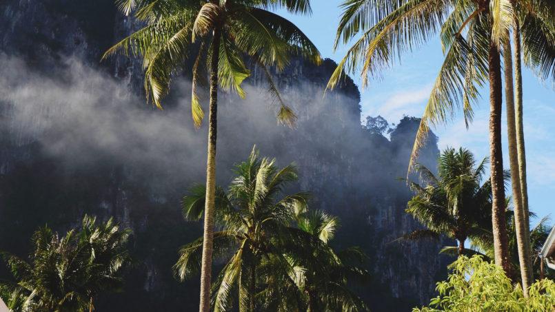 Nature & Jungle