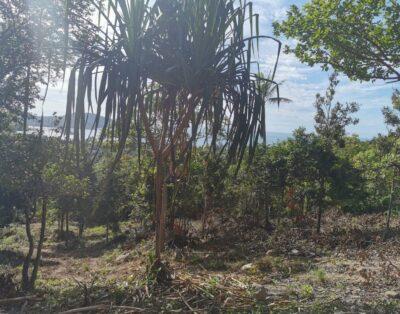 Sea View land in Chaloklum – 3.5 million THB per RAI